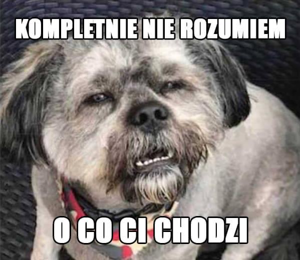 Mem zdezorientowany pies